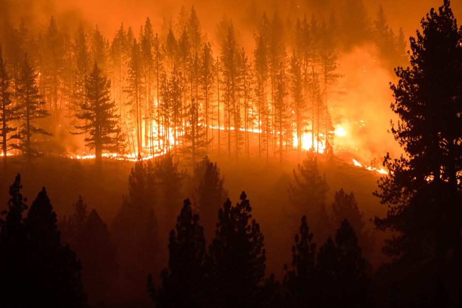 Flammen lodern zwischen Bäume während des Tamarack Feuers im Westen der USA.