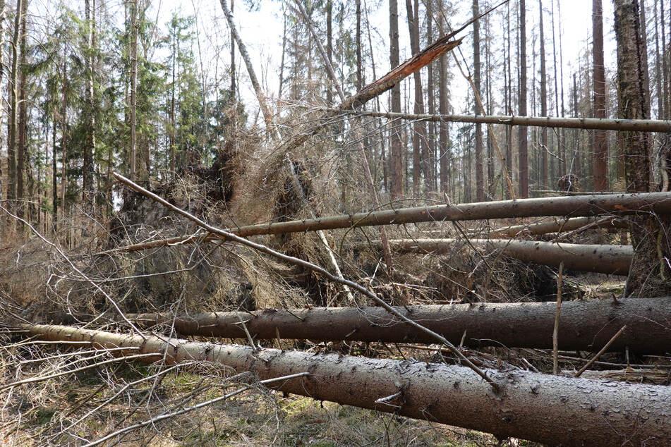 Totholz weg, damit wir wieder wandern können! Bergsteiger mit Bitte an Nationalpark