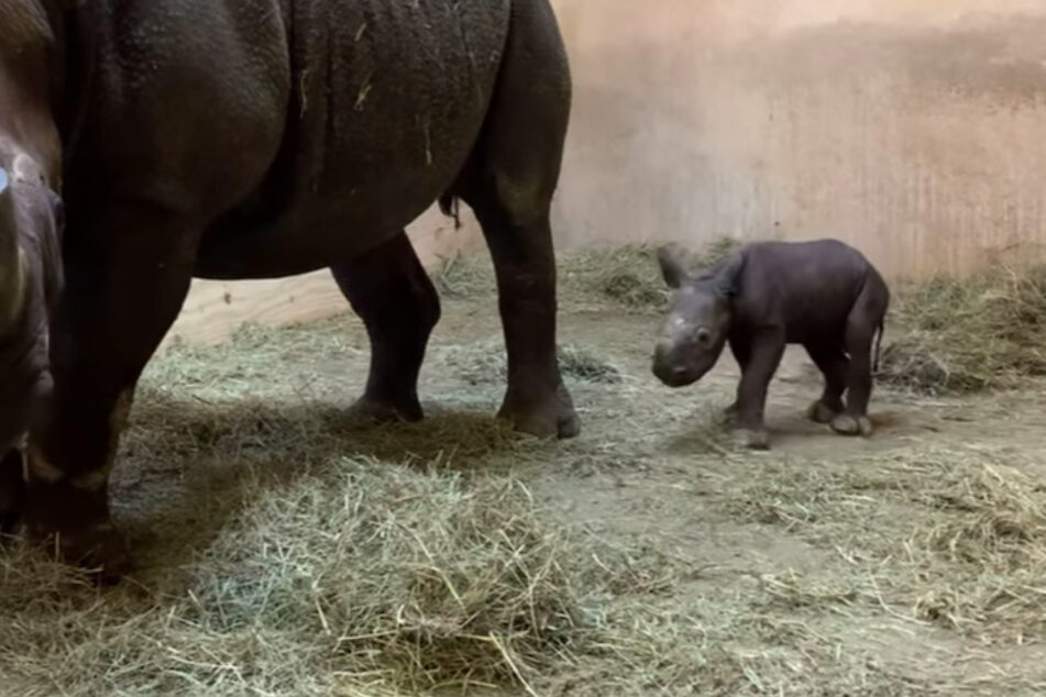 Immaculate conception? Kansas zoo gets big baby surprise!