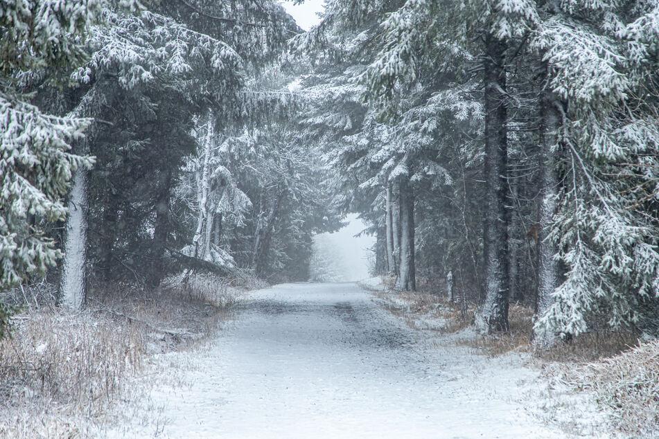 Pünktlich zu Weihnachten! Hier gibt's Neuschnee in Sachsen