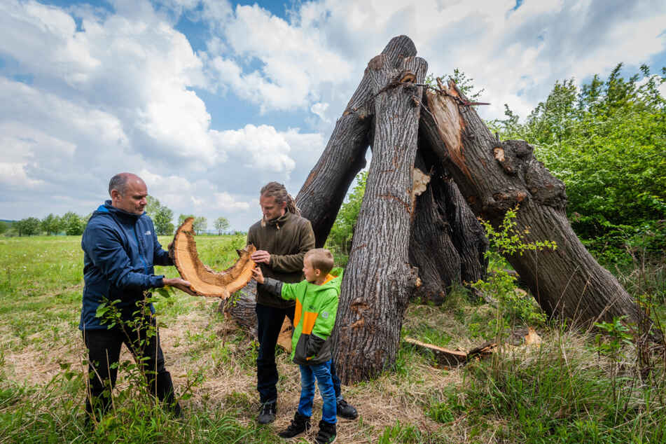 Jens Börner (56, l.) und Christian Winkler (35) von der Naturschutzbehörde sowie Charlie (7) von der AG Naturentdecker an der Totholz-Pyramide in Ebersdorf.