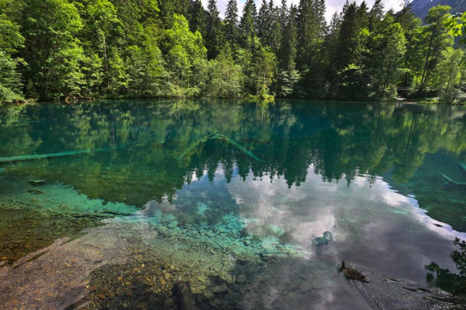 Eine Ente schwimmt auf dem glasklaren Wasser des Christlesees. Der See, der von unterirdischen Quellen gespeist wird hat eine konstante Temperatur von vier bis sechs Grad.