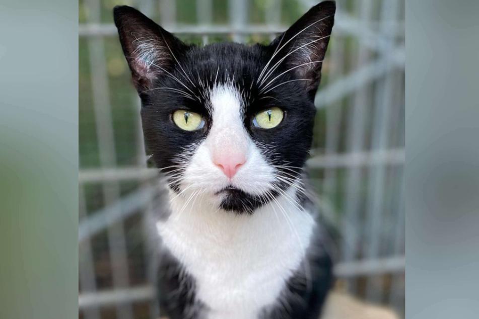 Am Samstag schilderte das Tierheim in Köln-Dellbrück einen besonders herzlosen Fall: Ein Katzen-Besitzer hatte sich seines Tieres auf gemeine Art entledigt.