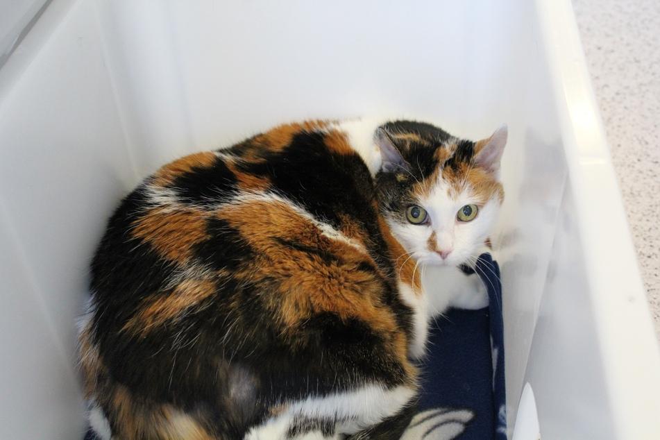 Katze Lilly.