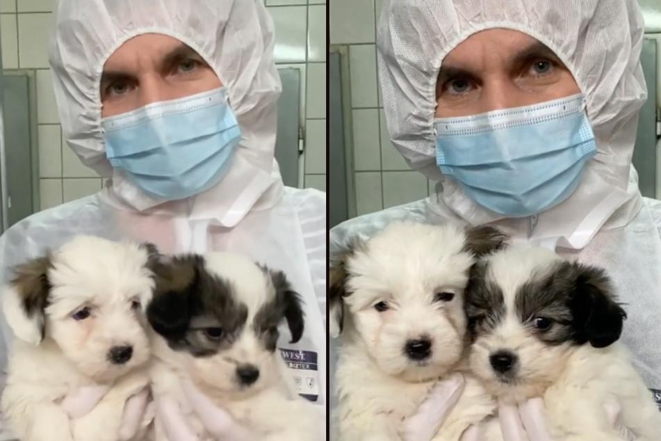 Die beiden Welpen aus einem Instagram-Video des Tierheims Bergheim sind mit einem tödlichen Virus infiziert. (Fotomontage)