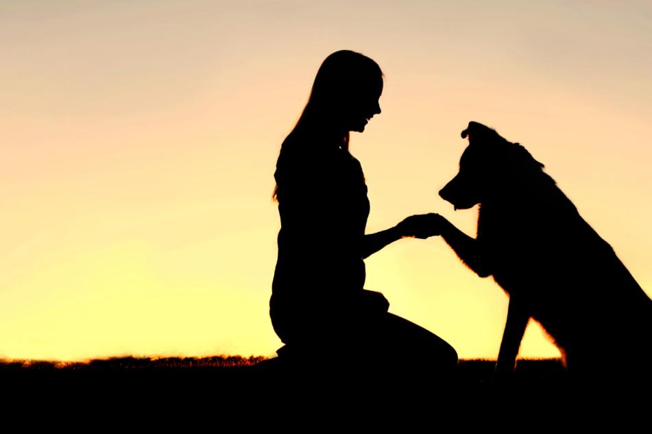 Hund und Mensch: Genanalyse zeigt erstmals Gemeinsamkeiten mit Tieren