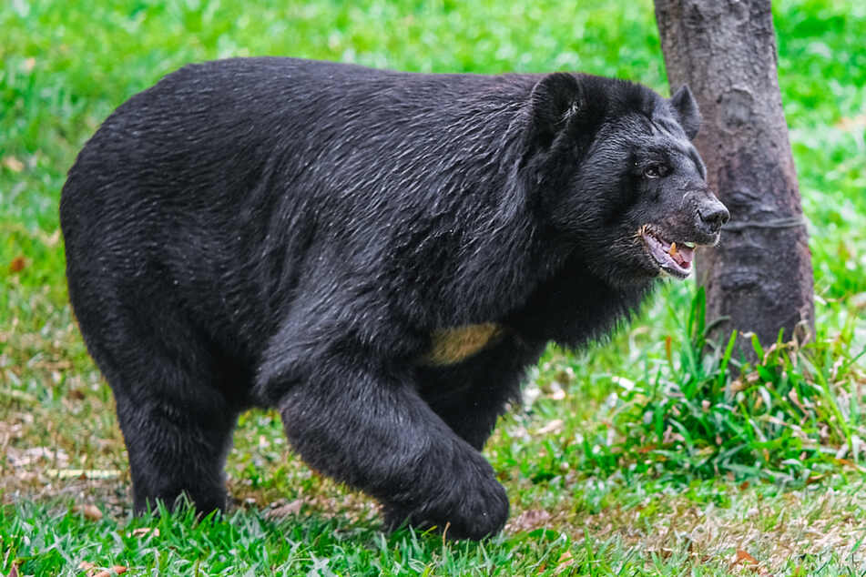 A bear ambushed the woman in Colorado (stock image).