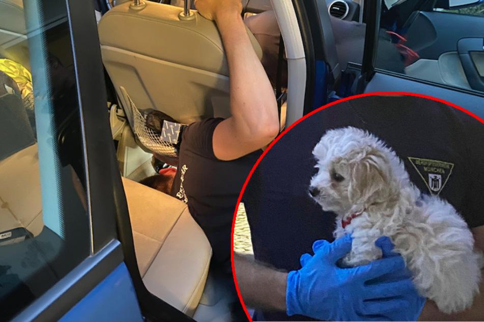 Missliche Lage: Hundewelpe Gina verkriecht sich unter Autositz und steckt plötzlich fest!