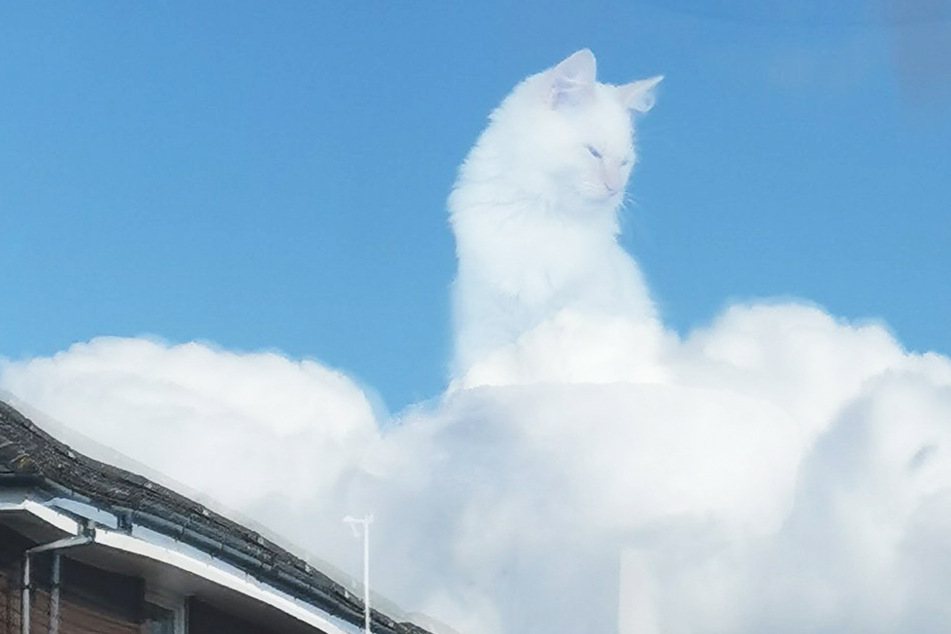 Cloud Feline: perfectly timed cat photo conquers Twitter