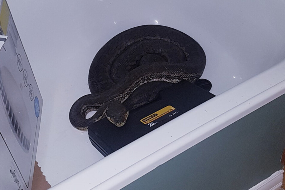 """No one wanted to take a shower with this uninvited """"guest."""""""