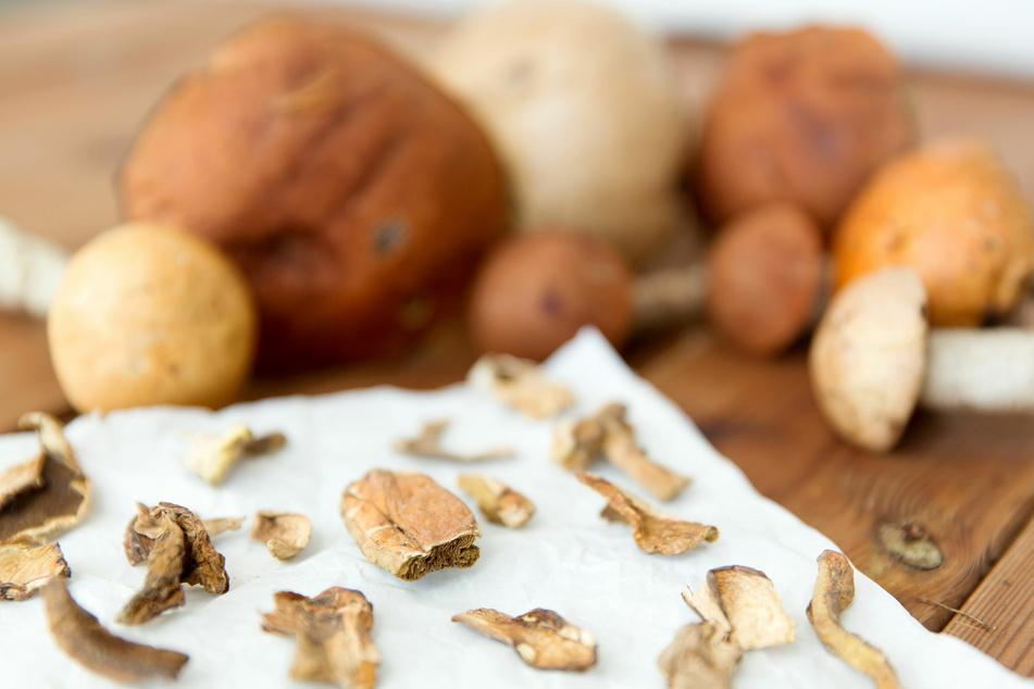 Das Pilze trocknen sichert einen Vorrat für mehrere Monate.