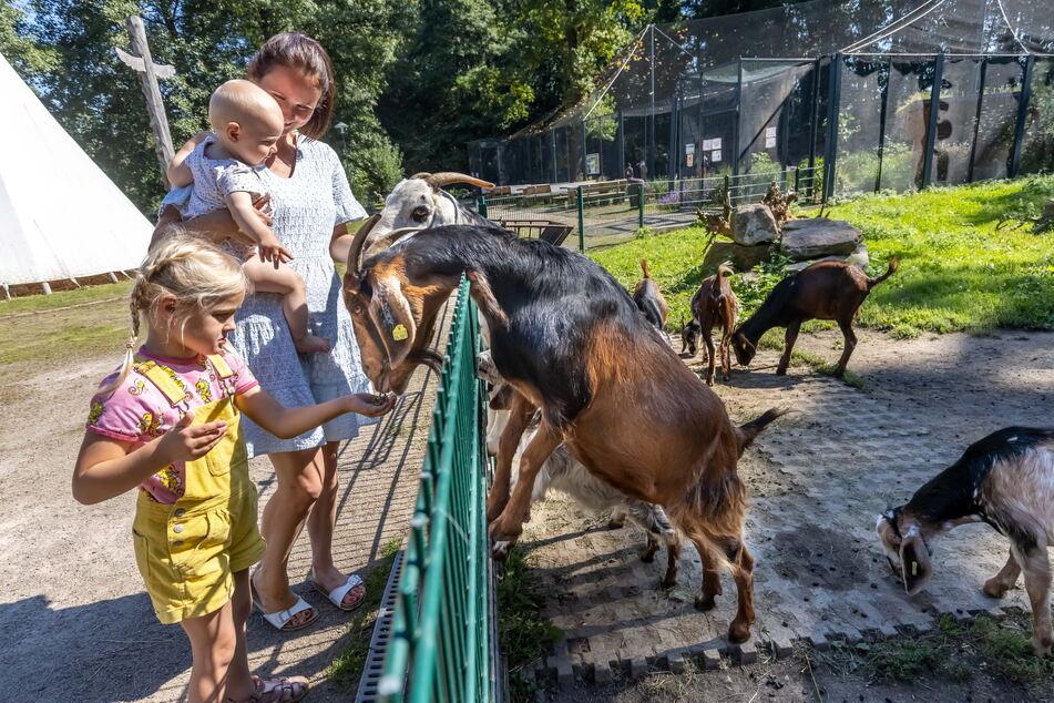 Raubtierfütterung: Julia, Leni und Emmi dürfen den immer hungrigen Ziegen Snacks geben.