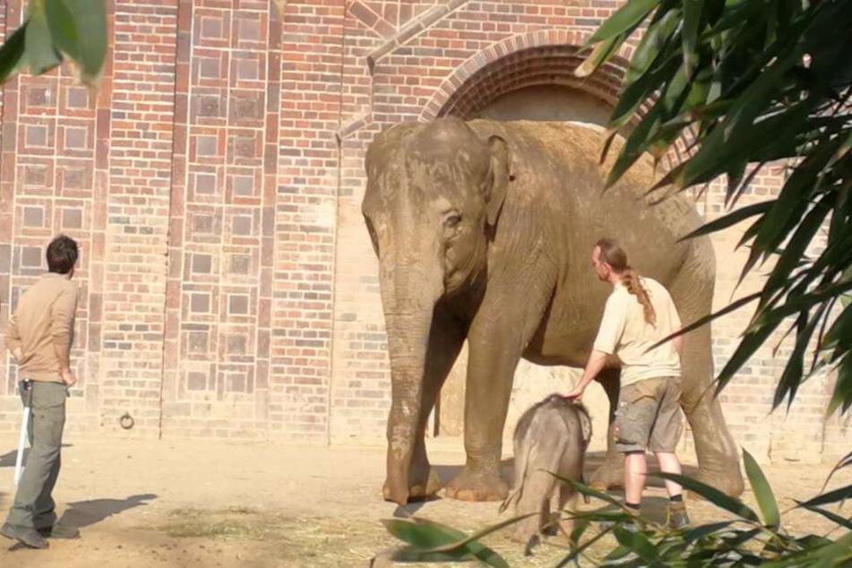 Tierpfleger Thomas Günther (r.) und seine Kollegen kümmern sich seit acht Wochen 24 Stunden täglich um das Wohl des Kleinen.