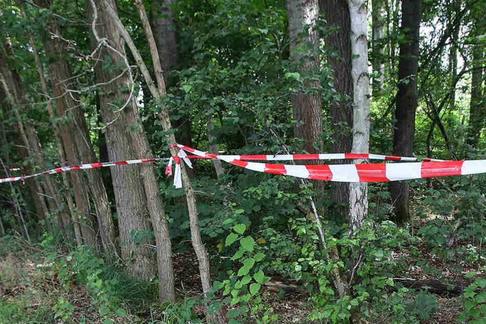 Mann entdeckt in der Lausitz menschliches Skelett auf Hochsitz