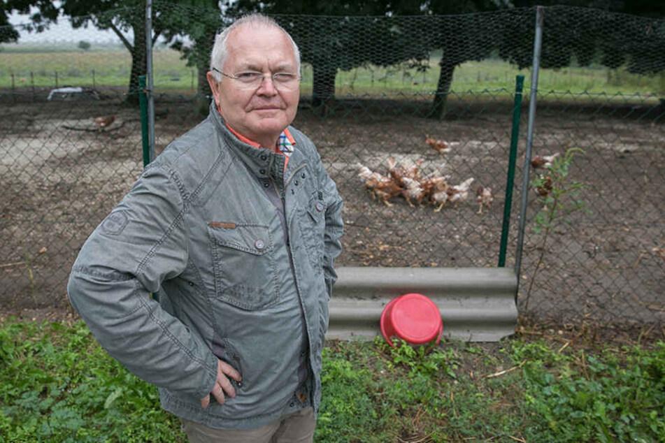 Ein Hühnerdieb wollte meine Legehennen klauen!