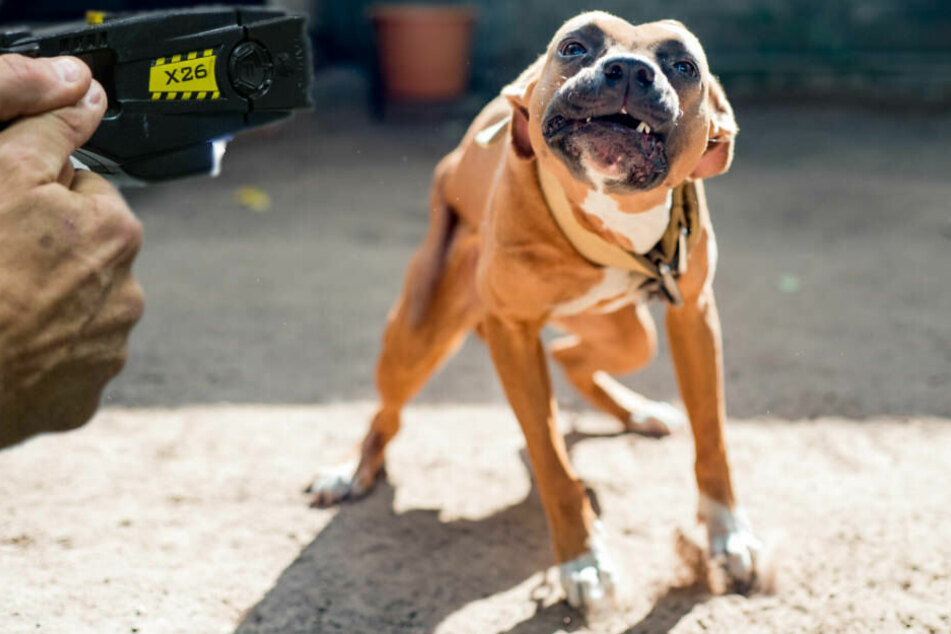 Der aggressive Hund musste von den Polizisten mit einem Taser gestoppt werden (Symbolbild).