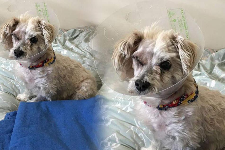 Verschollener Familienhund taucht nach einem Jahr wieder auf: Doch er gibt viele Rätsel auf