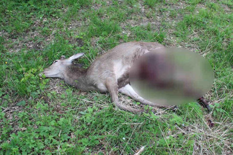 Der Hirsch starb an seinen schweren Verletzungen.