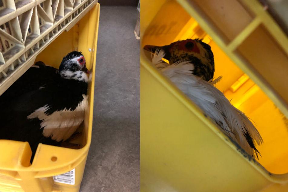 Per Transportbox ging es dann zu einer Tierschutzstation.