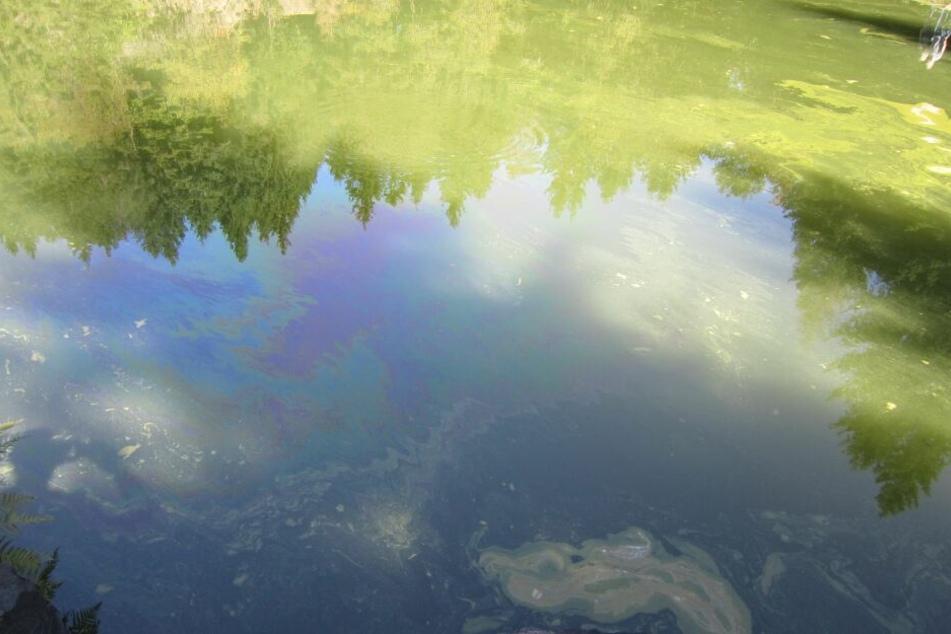 Das Öl verteilte sich auf dem See.