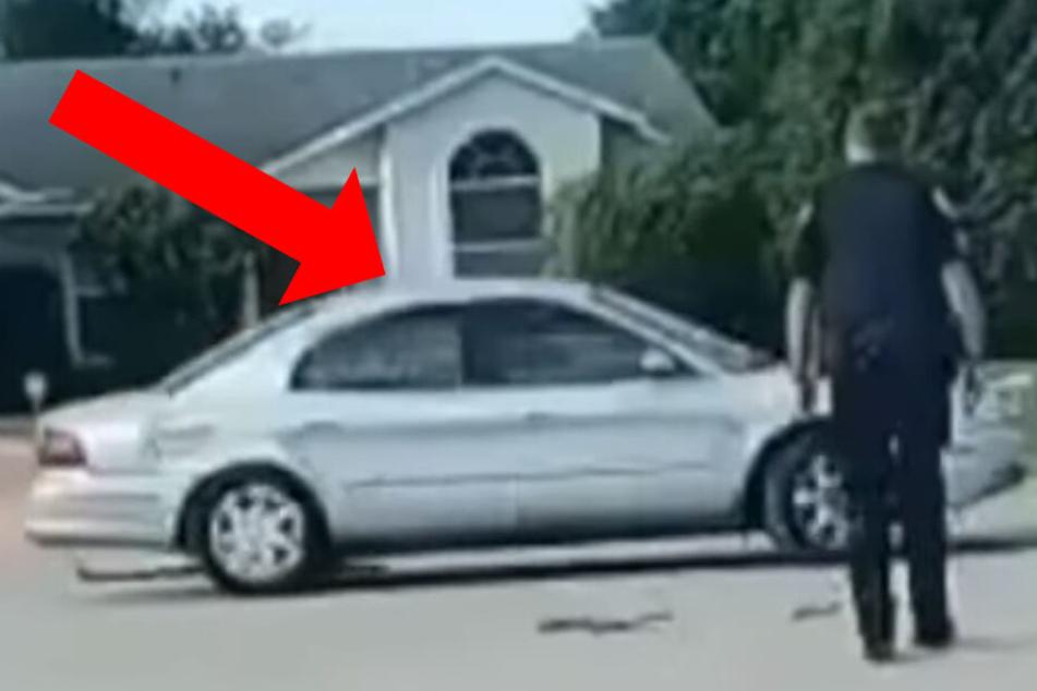 Hund setzt sich ins Auto und fährt 30 Minuten rückwärts im Kreis