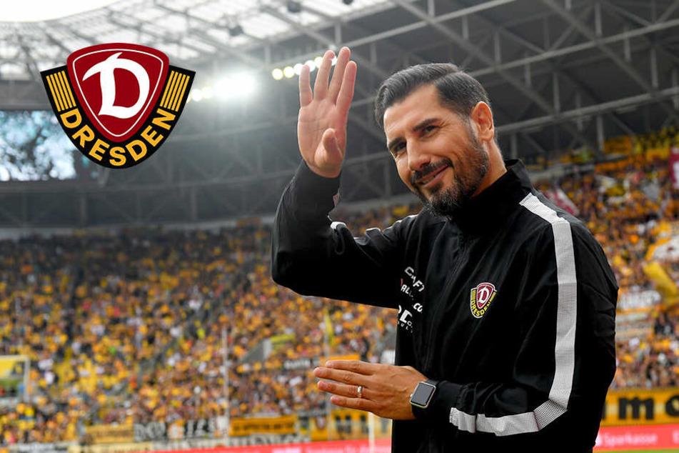 Cristian Fiel wird neuer Dynamo-Trainer