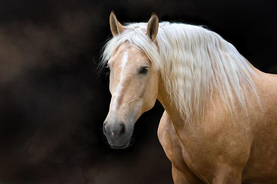 Warum das Pferd letztlich erschrocken ist, ist bislang noch nicht klar. (Symbolbild).