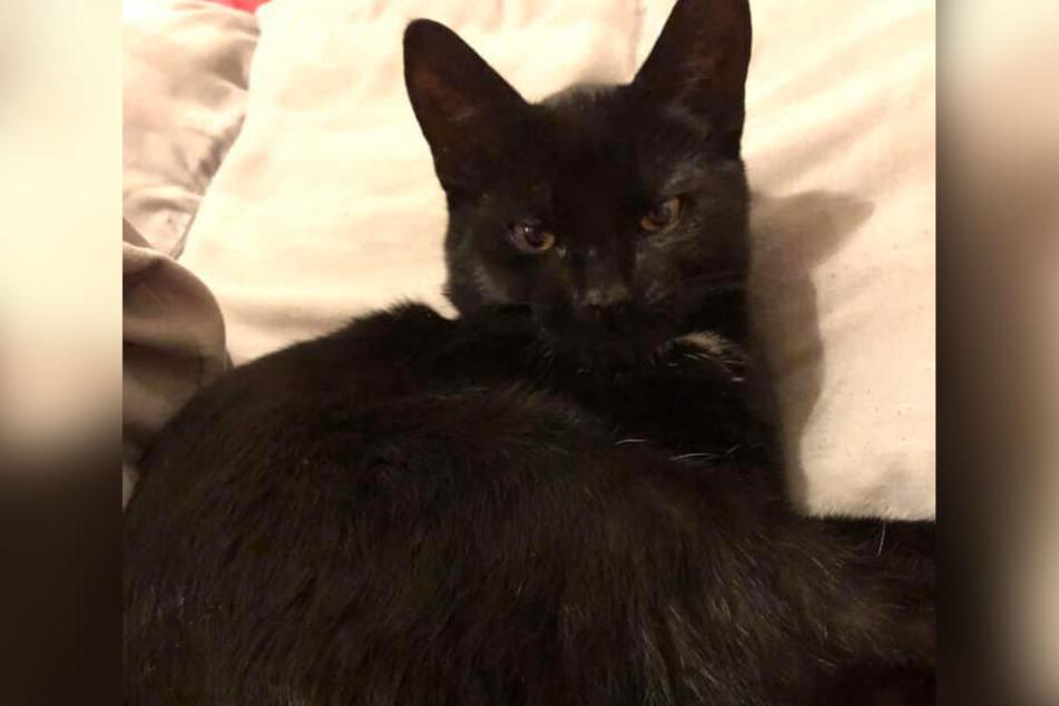 Katzen-Baby ohne Kopf: Hat der berüchtigte Tier-Killer wieder zugeschlagen?