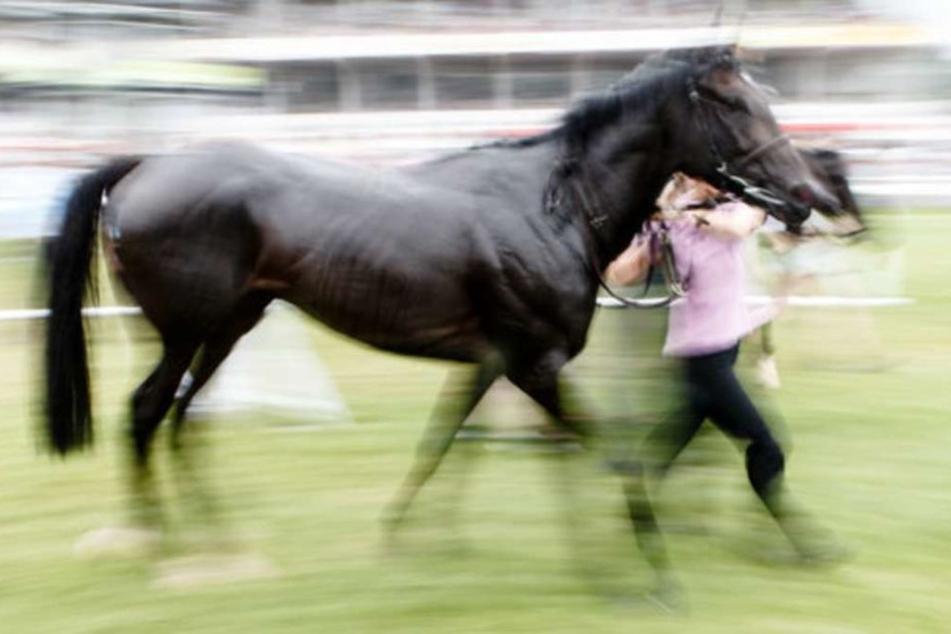 Das Pferd war laut Polizei aus bisher ungeklärter Ursache stehen geblieben, wodurch die Reiterin stürzte. (Symbolbild)