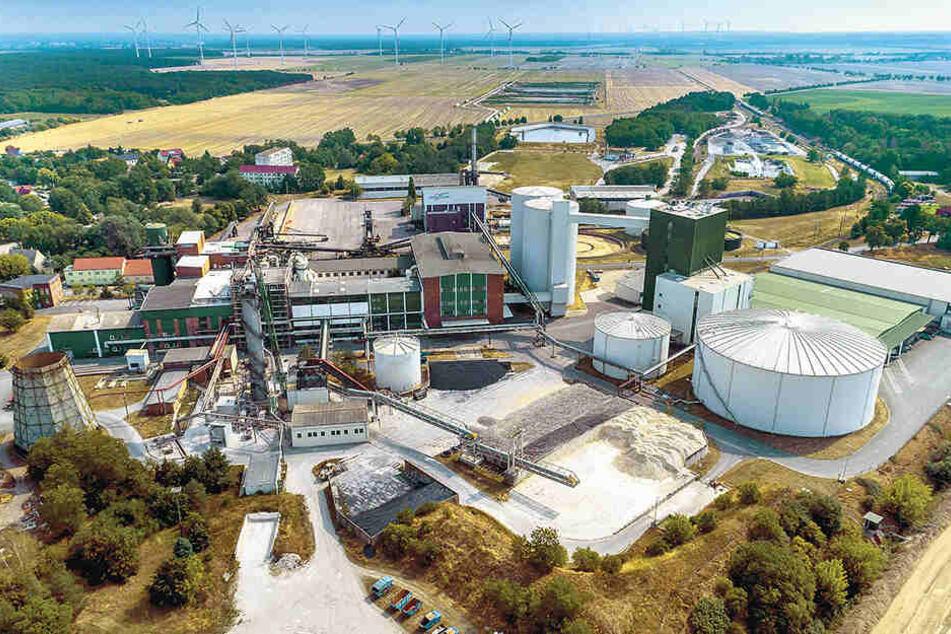 """Die Zuckerfabrik Brottewitz wurde 1872/73 als """"Actien Zuckerfabrik Mühlberg a. E."""" gegründet. Jährlich werden dort bis zu 800000 Tonnen Rüben verarbeitet."""