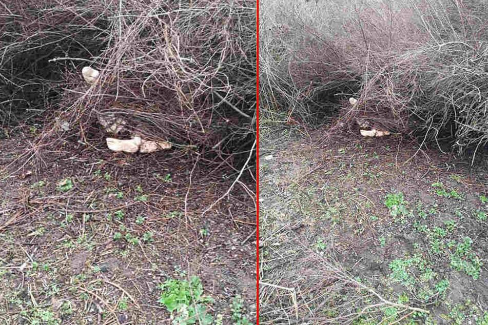 Straßenarbeiter entdeckten im Gebüsch diese Beine.