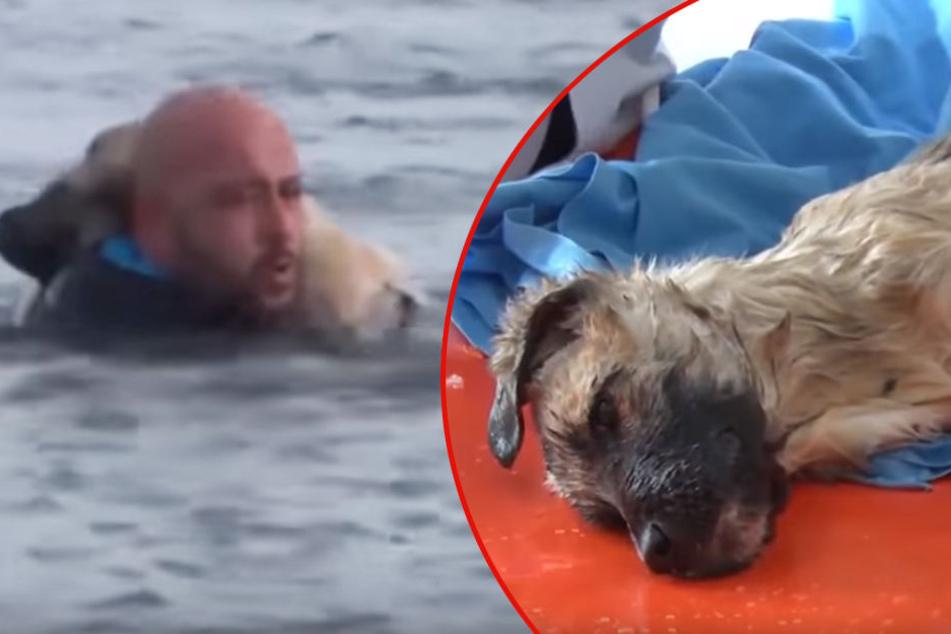 Rettung in letzter Sekunde: Polizist befreit Hund aus vereistem See