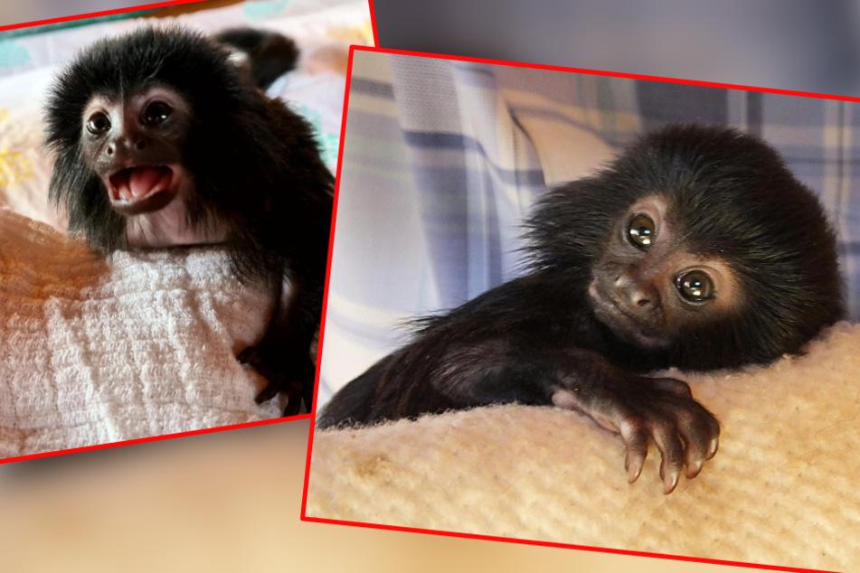 Mama stirbt nach Geburt: Affenbaby wächst in dieser zuckersüßen Patchwork-Familie auf