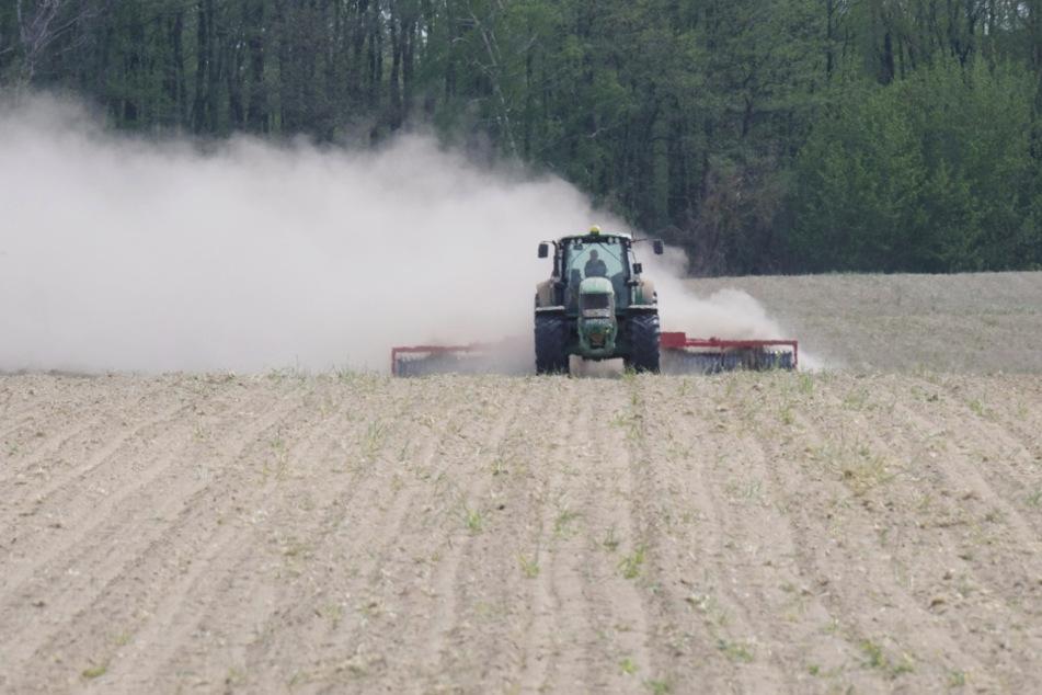 Staubtrocken: Werden Sachsens Felder gepflügt oder nur noch abgestaubt? Landwirte fahren wegen der anhaltenden Trockenheit Verluste ein.