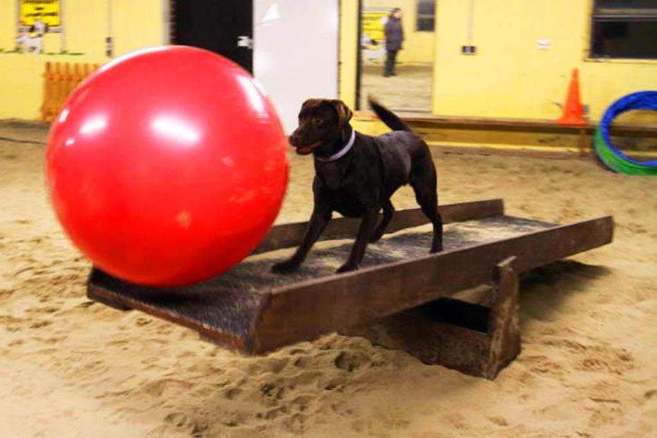 Der Ball wird durch die Halle gejagt. Gerne auch mal über Hindernisse hinweg.