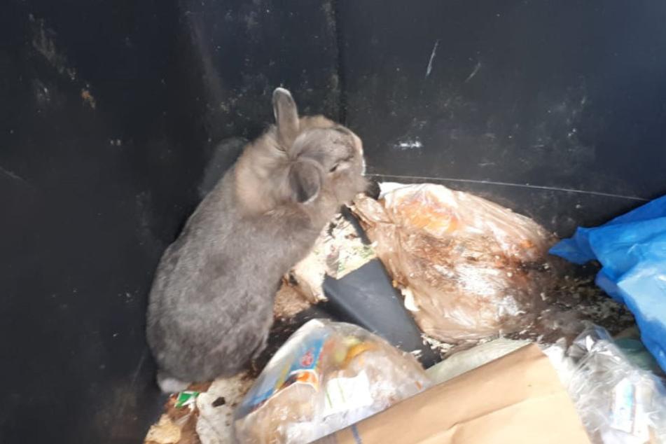 Das Tier hockte im Müll.