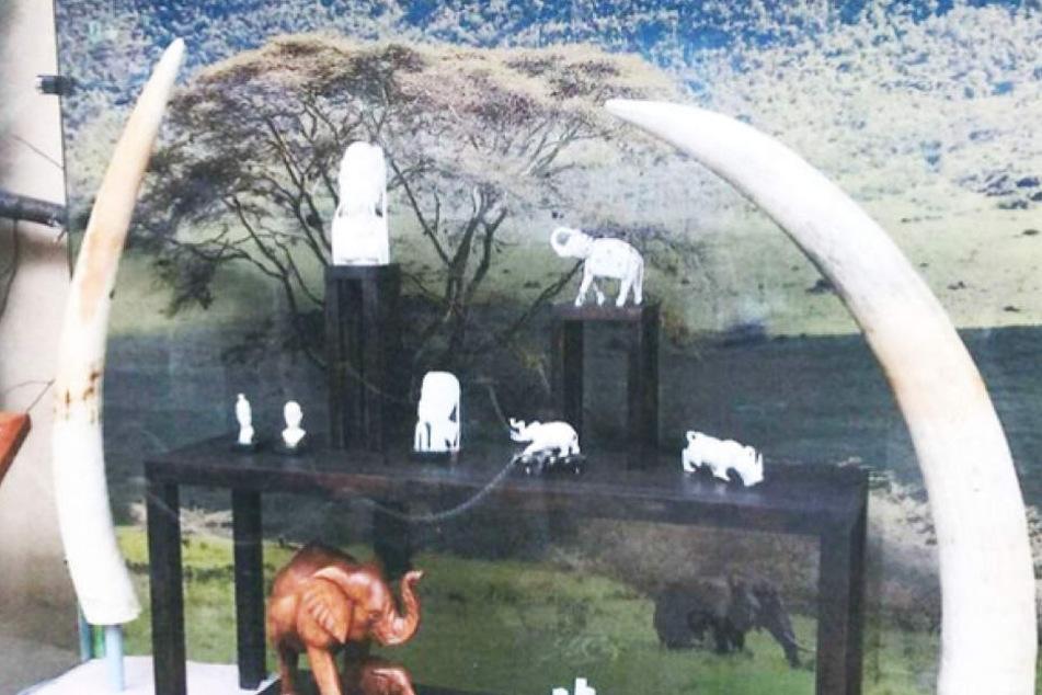 Wo ist das wertvolle Elfenbein hinverschwunden? Am Sonntag räumten Einbrecher eine Vitrine im Zoo Magdeburg leer.