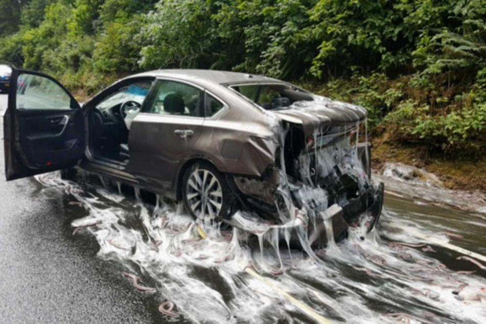 In Stresssituationen sondern die Aale ein schleimiges Sekret ab. Es bedeckte Unfallfahrzeuge und Straße.