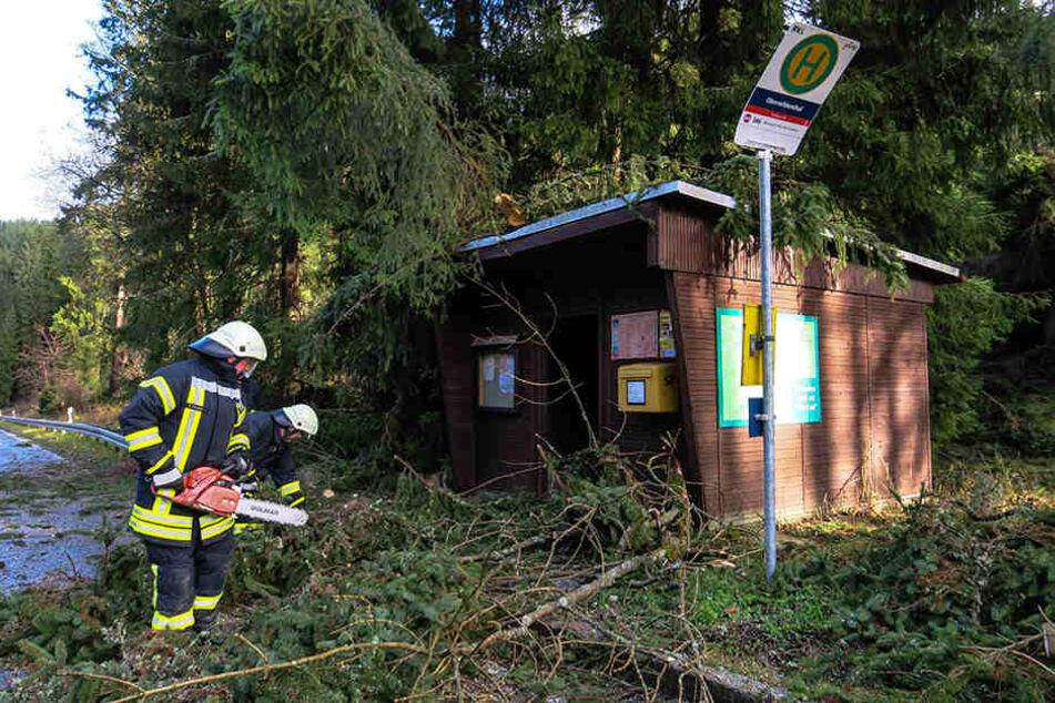 Mehrere Äste beschädigten eine kleine Bushaltestelle.