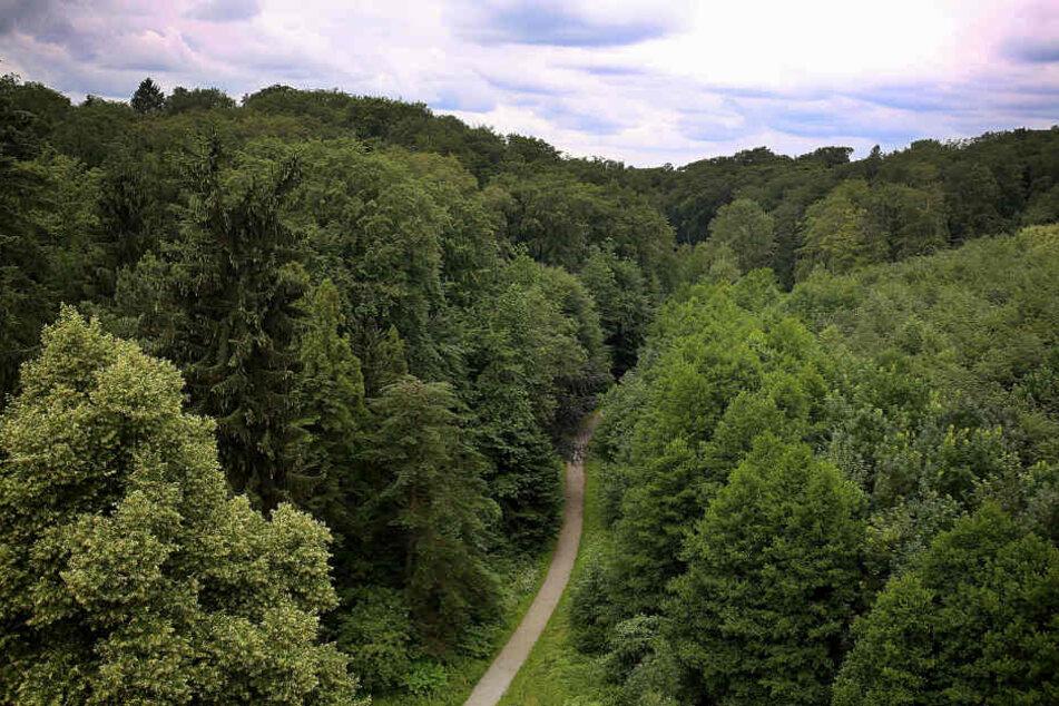 Auf dem Weg nach Hause nach einem Freibadbesuch sollen mehrere Jungen eine 13-Jährige in einen Wald gezerrt und missbraucht haben.
