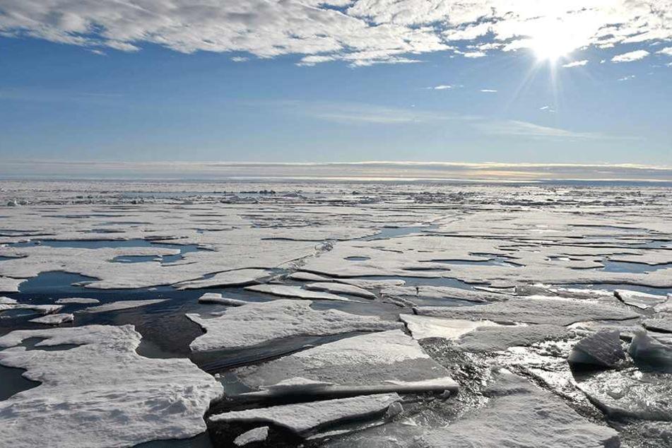 In nahezu allen untersuchten Proben auch aus der Arktis wurde Mikroplastik gefunden.