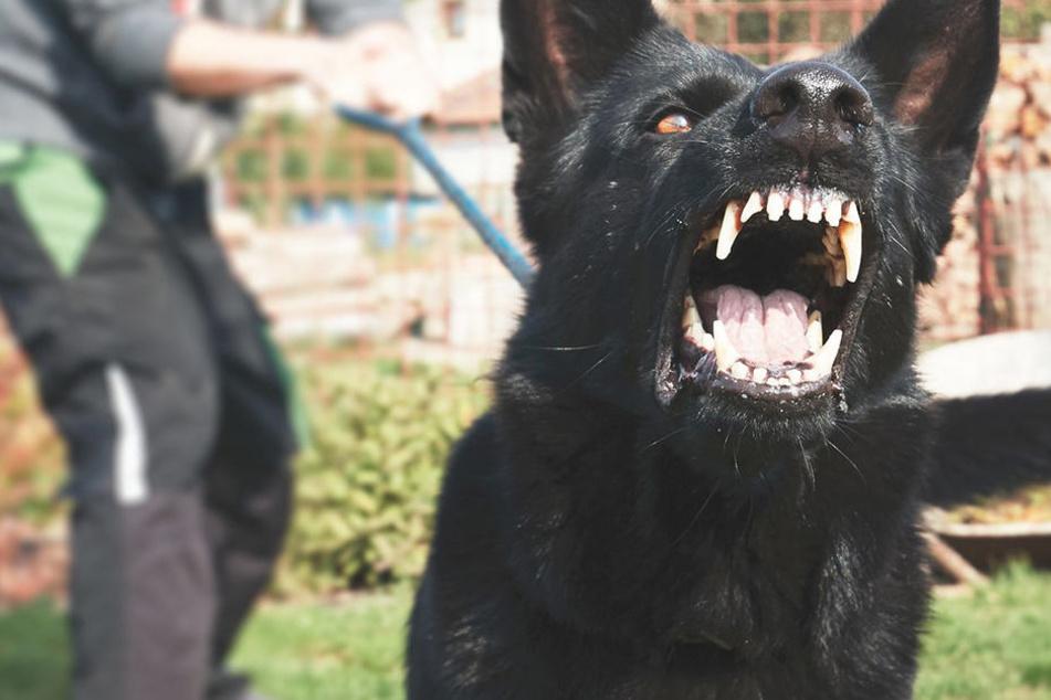Der Hund griff auf einem Spielplatz zwölf Kinder an.