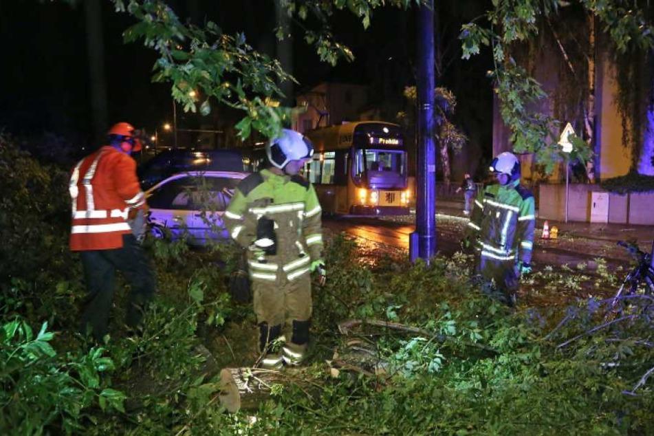 Sturm-Chaos in Dresden! So schlimm hat es gestern Nacht gewütet