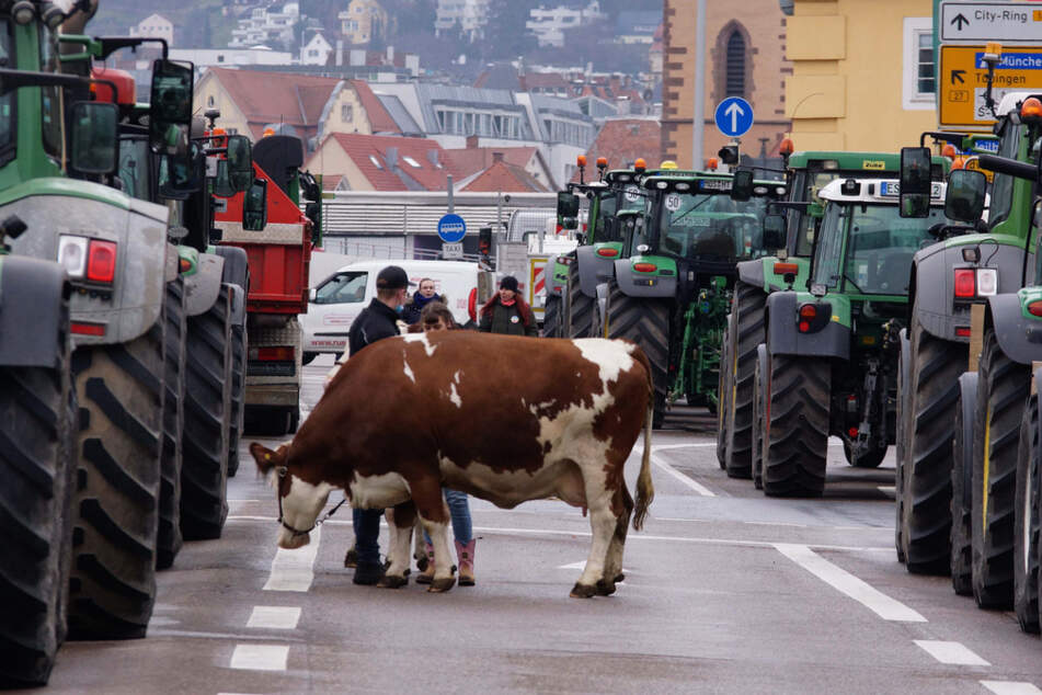 Stuttgart: Unfairer Wettbewerb! Bauern sind mächtig sauer