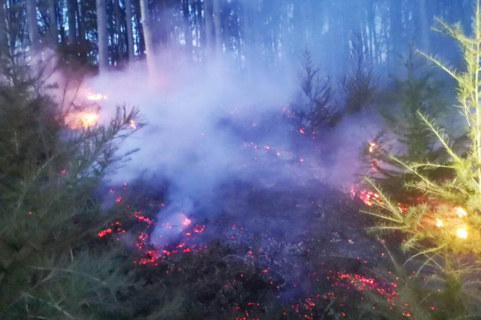 1,5 Hektar Wald standen in Brand.
