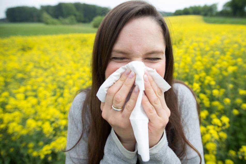 In Bayern sollen Pollenallergiker und Asthmatiker besser Infos bekommen. (Symbolbild)