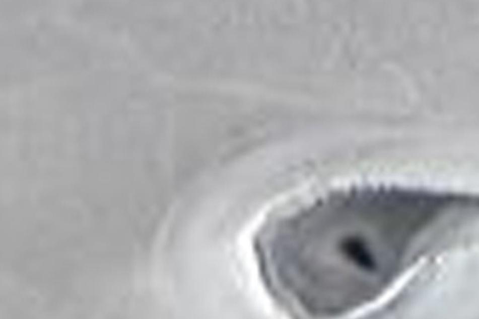 Auch die NASA ist ratlos: Was sind das für mysteriöse Gebilde in der Arktis?