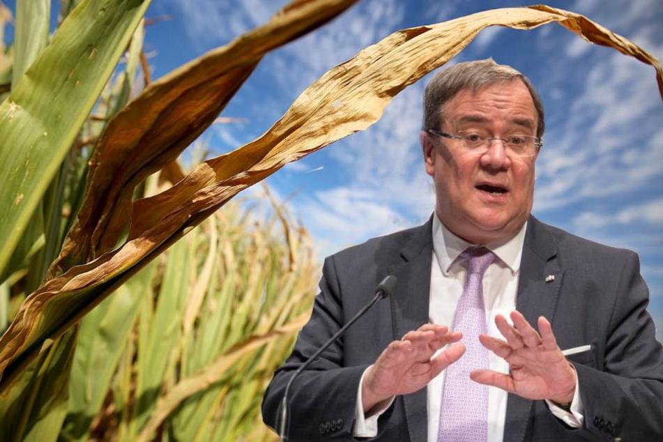 Will Bauern mit Dürrefolgen nicht allein lassen: Ministerpräsident Armin Laschet (57).