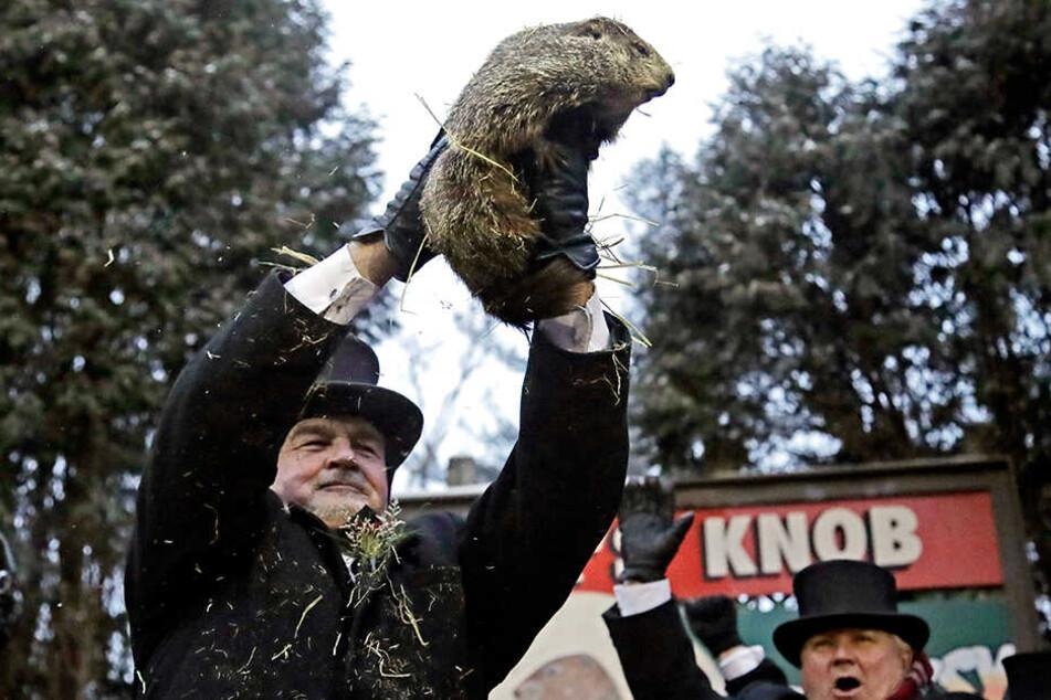 Der Co-Vorsitzende des Groundhog Club, John Griffiths (li.), hält Phil, das wetterprognostizierende Murmeltier, während des 133. Murmeltiertags hoch.