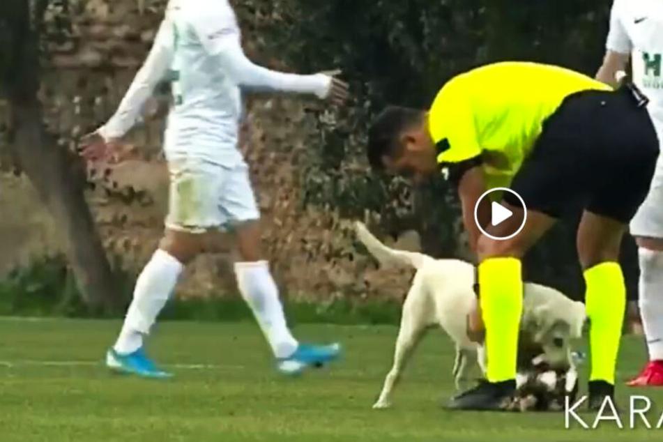 Hund macht Sachen: Vierbeiner rennt aufs Feld und sorgt für Spielunterbrechung